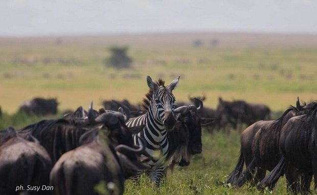5 Reasons to look forward to our Tanzania Migration Safari
